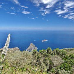 Tajinaste Blanco de ANAGA – Parque Rural de Anaga – Tenerife –