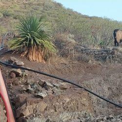 """""""Las cabras salvajes se lo comen todo"""": los vecinos de Anaga, desesperados"""