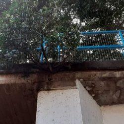 El puente de Taganana en San Andrés sin mantenimiento….. a la vista está, que …