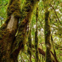 """Dicen que """"los árboles son los esfuerzos de la tierra para hablar con el cielo"""",…"""