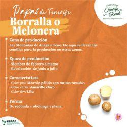 La #PapaBorralla (o también #PapaMelonera) se produce en las montañas de Anaga y…