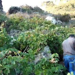 Seguir manteniendo los cultivos, y por tanto los paisajes, en esos lugares sin…